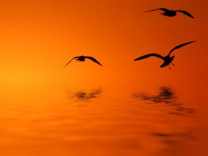 birds18
